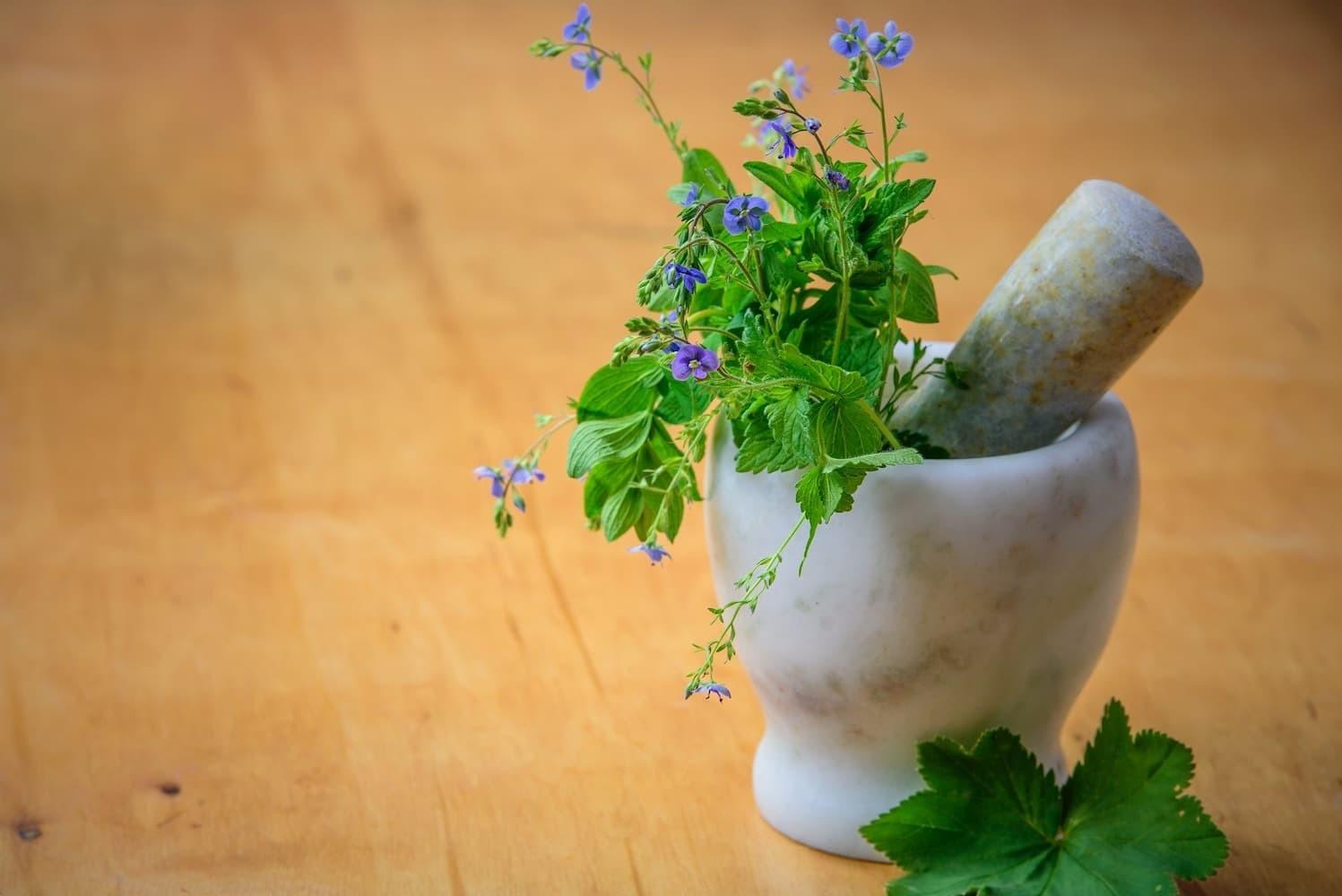 Studying Herbal Medicine