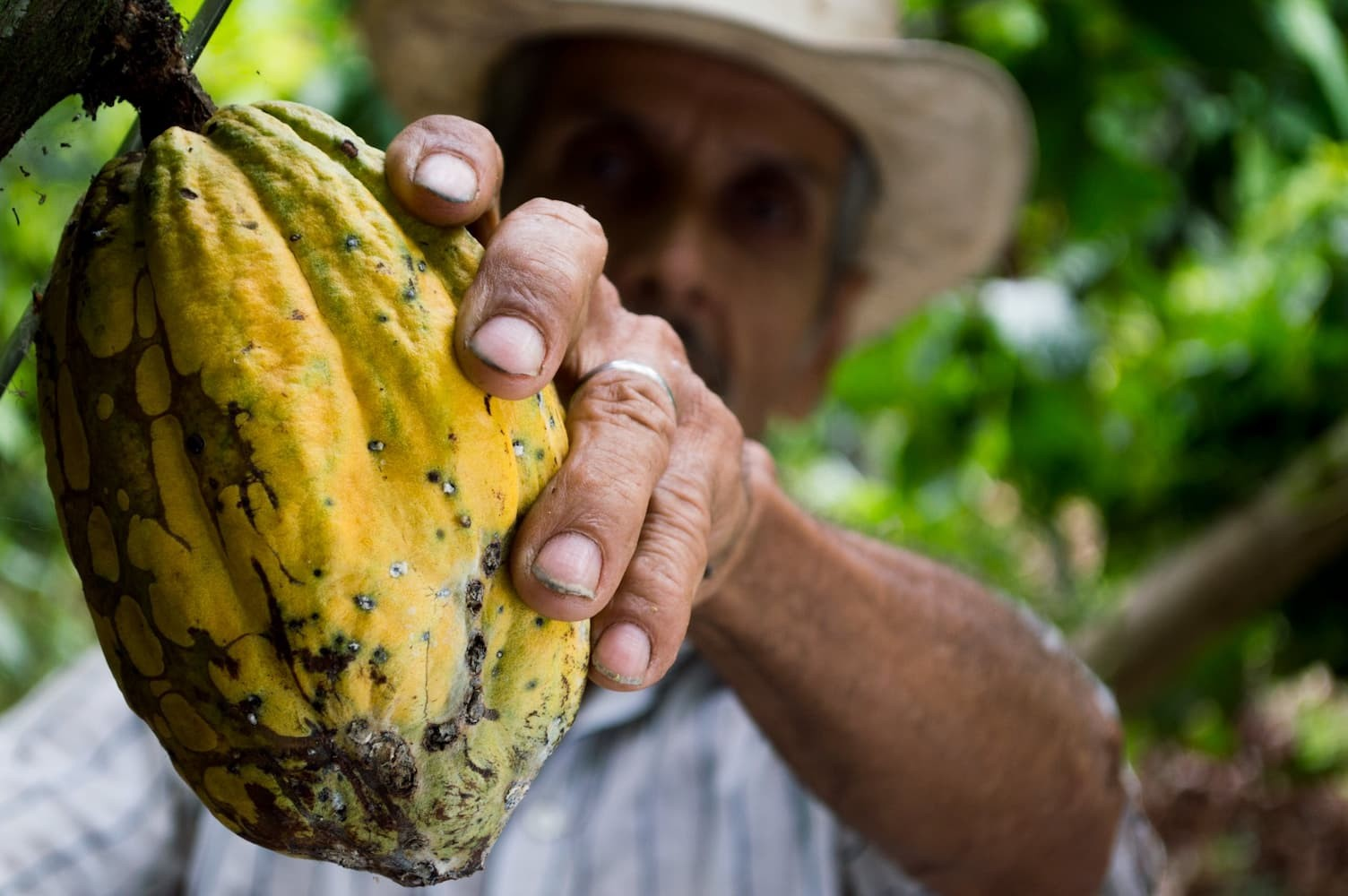 Activating and Relaxing Using Ceremonial Cacao