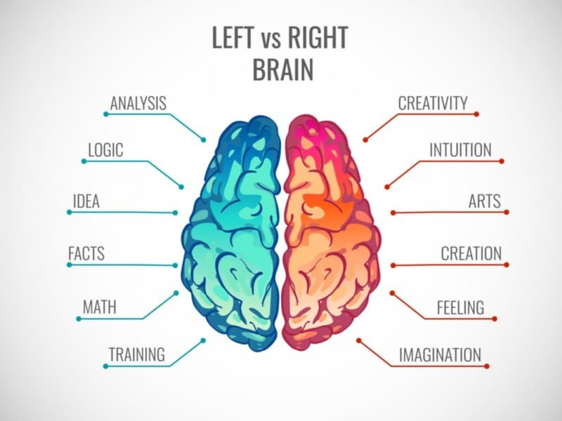 Left Side vs. Right Side of the Brain
