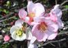 Hawkesbury Herbs & Healing