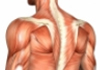 Enmore Centre for Spine & Musculoskeletal Health therapist on Natural Therapy Pages