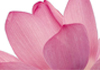Sheena Cartwright therapist on Natural Therapy Pages