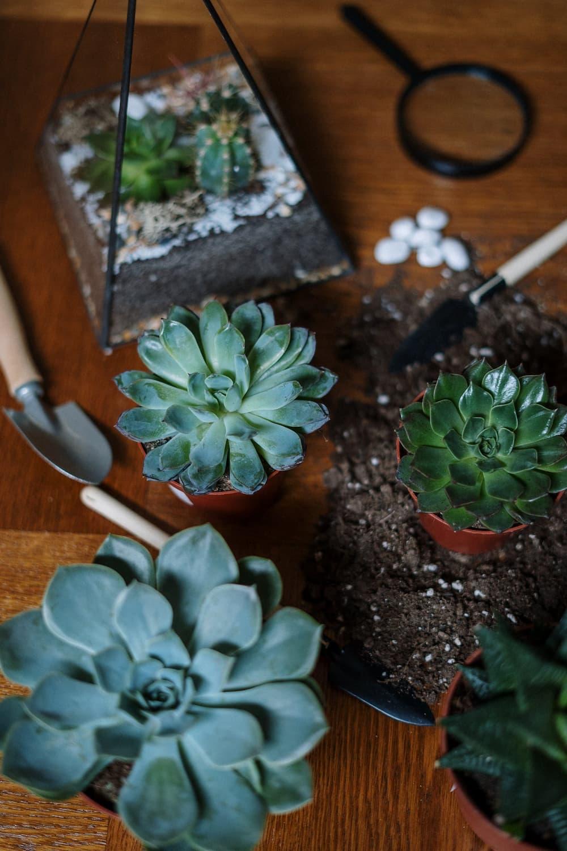 Home gardening for health & wellness
