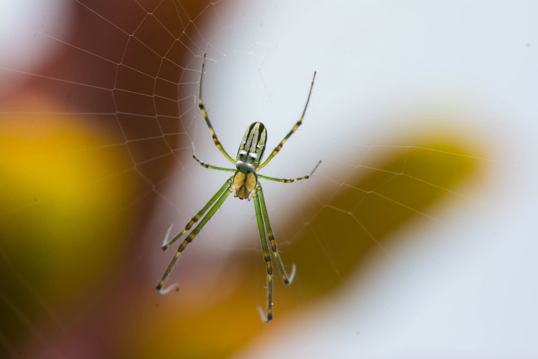 Arachnophobia, fear of spiders