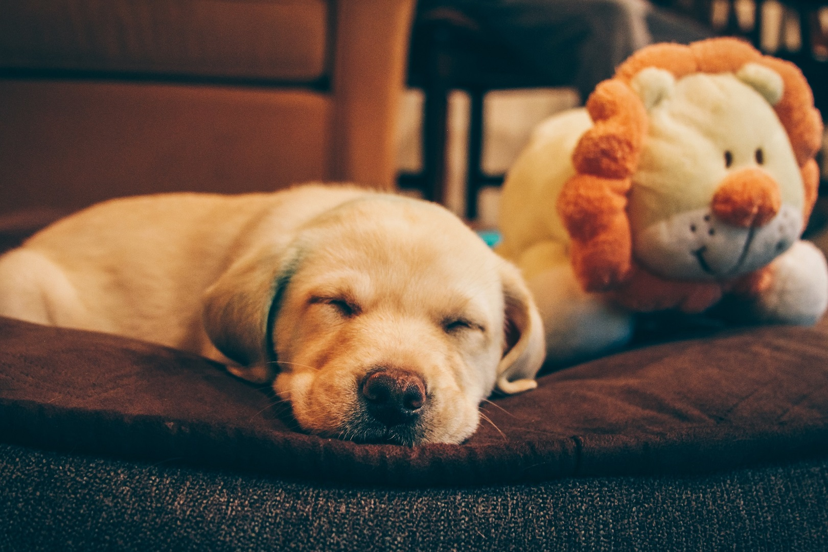 Animal Therapy Courses in Australia