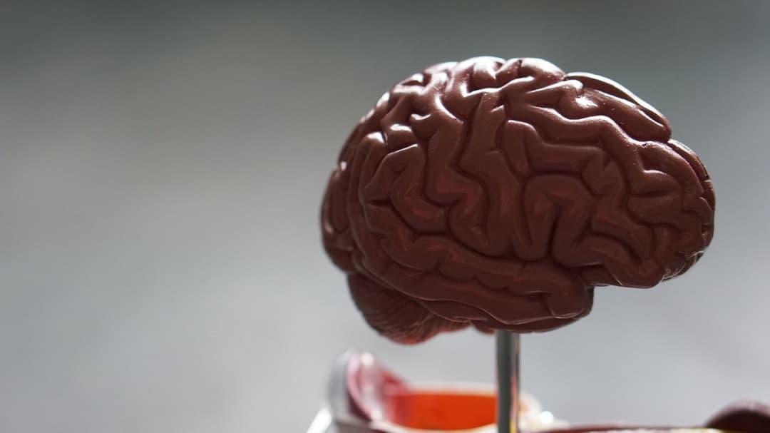 Neuro Linguistic Programming (NLP) Online in Australia