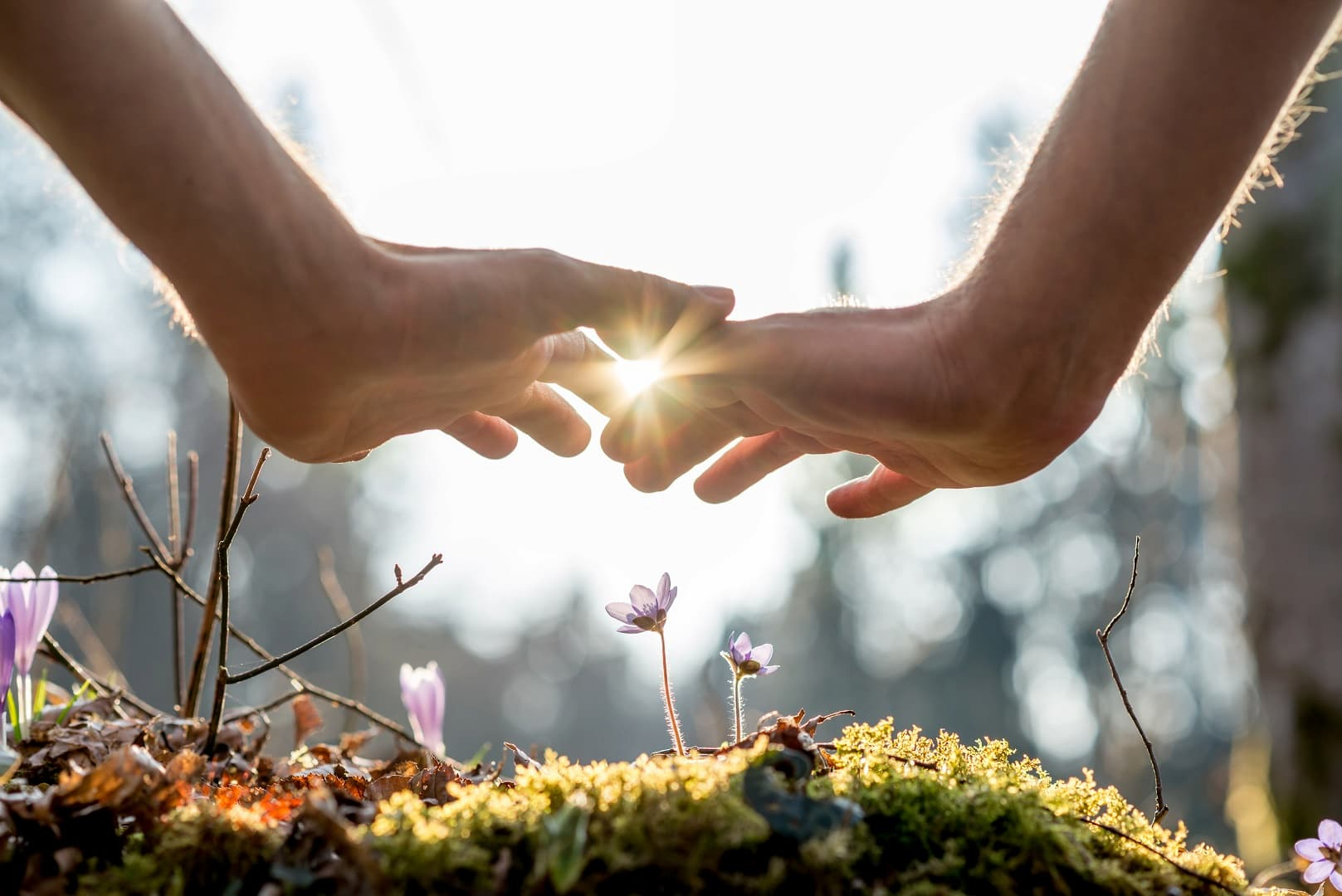 Pranic Healing Online in Australia