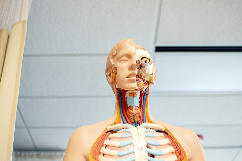 Human biology courses in Australia